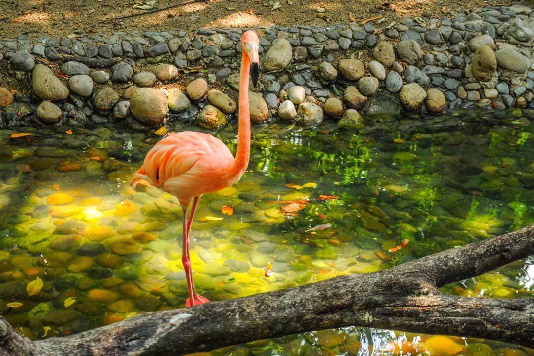 Flamingo Hotel del Parque