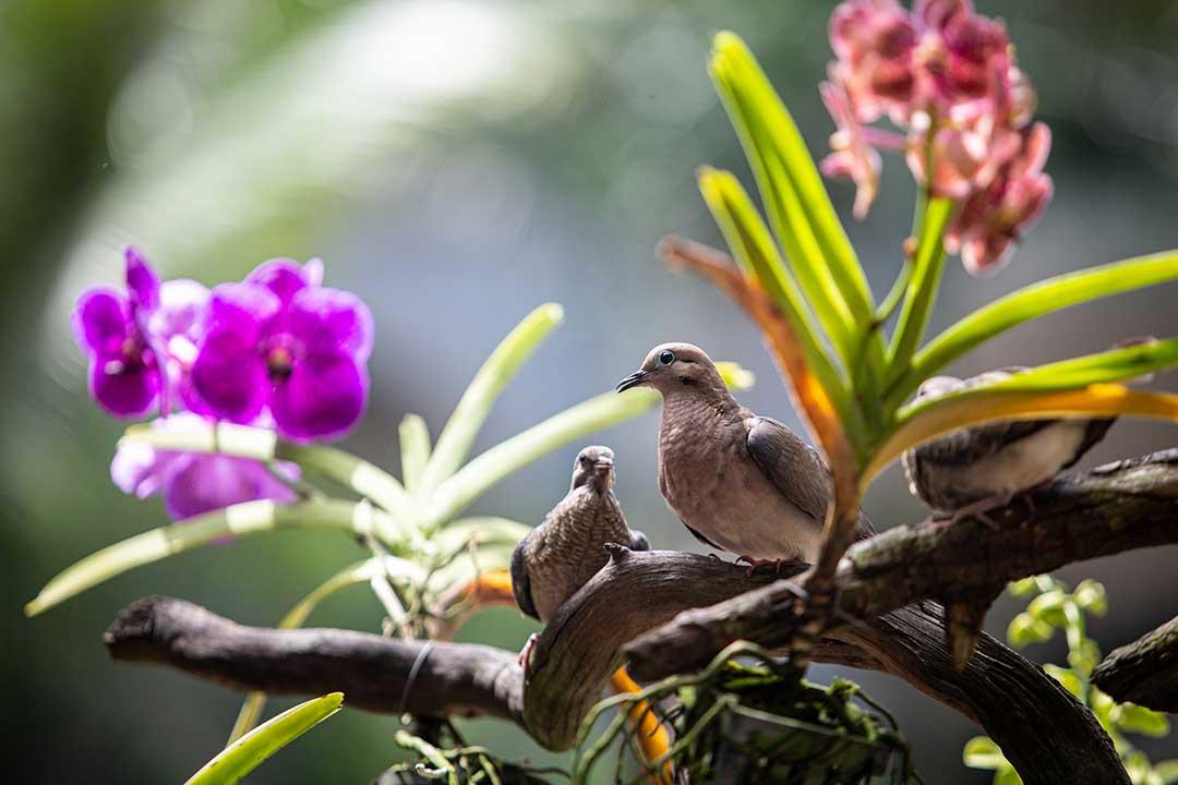 Hotel del Parque Naturaleza
